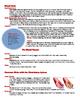 Circulatory System Reading, Writing and Art Activity
