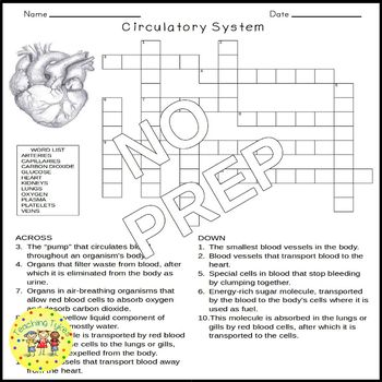 circulatory system science crossword puzzle by teaching tykes tpt. Black Bedroom Furniture Sets. Home Design Ideas