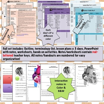 Circulatory System Structure Lesson Plan, PowerPoint, Activities