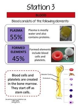Circulatory System Task Cards