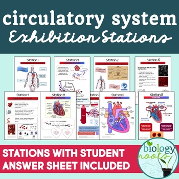 Circulatory System Task Cards