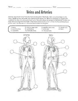 Circulatory System Unit Work