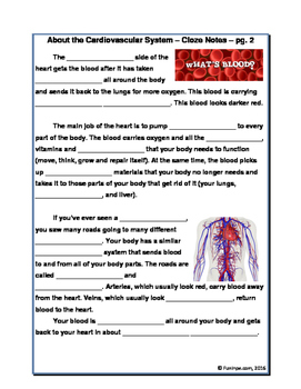 Cardiovascular Circulatory System Unit - Worksheets, Activities, Reading, & More