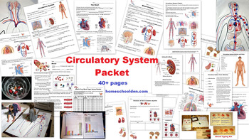 Circulatory System Unit (and Hands-On Activities) 40+ Pages