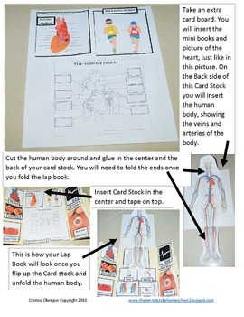 Circulatory System Unit and Lap Book