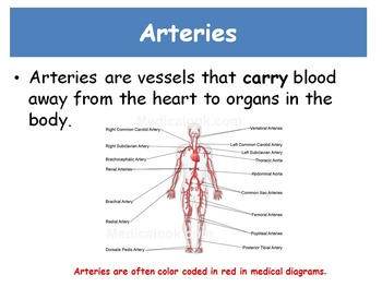 Circulatory System Vocabulary Introduction-Differentiated 3 levels