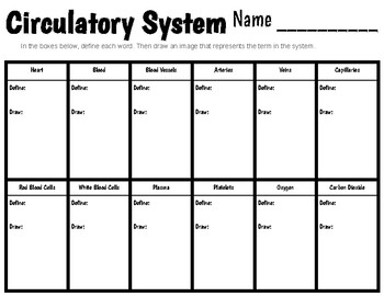 Circulatory System Vocabulary Worksheet