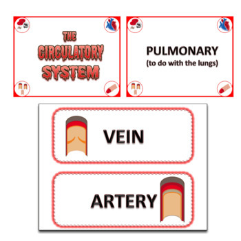 Circulatory System Word Wall - Editable