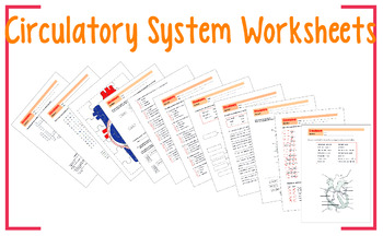Circulatory System Worksheet 10