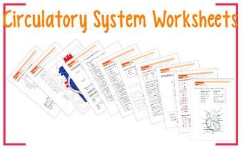 Circulatory System Worksheet 9