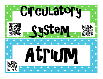 Circulatory System and Blood INTERACTIVE Word Wall