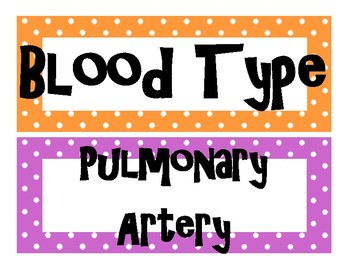 Circulatory System and Blood Word Wall