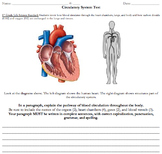 Circulatory System and Digestive System Assessment (Free Response)