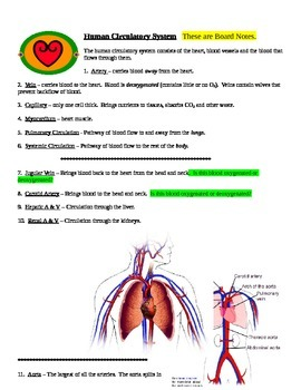 Circulatory System and Human Heart Board Notes