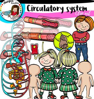 Circulatory System- big set!