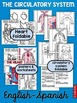 Circulatory System fold and learn