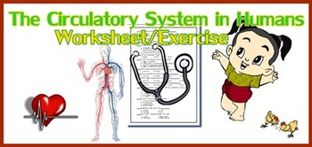 Circulatory System in Humans Worksheet/Exercise