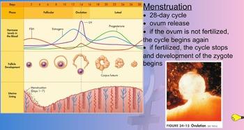 Circulatory and Reproductive