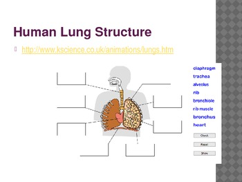 Circulatory and respiratory systems applied to metabolism Dynamic Powerpoint