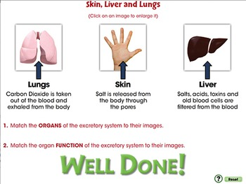 Circulatory,Digestive & Reproductive Systems: Skin, Liver and Lungs - PC Gr. 3-8