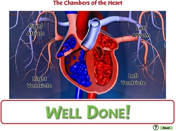 Circulatory,Digestive & Reproductive Systems:The Chambers of the Heart-PC Gr.3-8