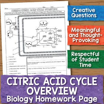 Citric Acid Cycle Overview Biology Homework Worksheet