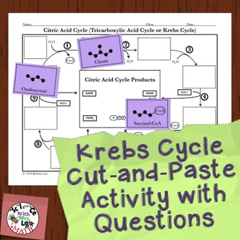 Cell Respiration Activity: Krebs Cycle Cut and Paste by ...