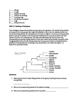 Cladogram Analysis Lab