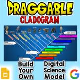 Cladogram - Digital Draggable Science Model
