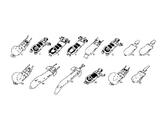 Cladogram/Classification Lab Activity