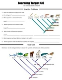 Cladograms Worksheet Using Common Ancestors and Evolutiona