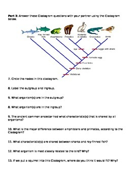 Cladograms Worksheet and Pr by Brianna Jenkins  Teachers Pay Teachers