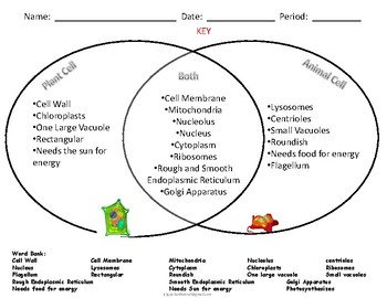Comparing animal and plant cells venn diagram acurnamedia comparing animal and plant cells venn diagram ccuart Gallery