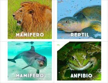 Clasificación de Animales- Vertebrate Animals in Spanish