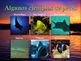 Clasificación de los Animales: Presentación en PowerPoint y Actividades