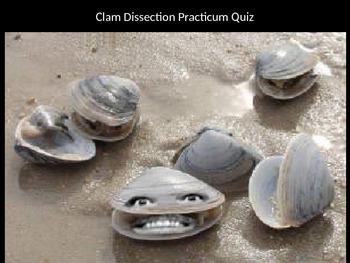 Class Bivalvia (Phylum Mollusca) Clam Dissection Visual Pr