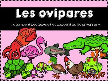 Classes des animaux - Affiches