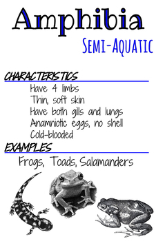 Classes Posters- Amphibia