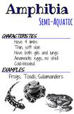 Classes Posters- Amphibia
