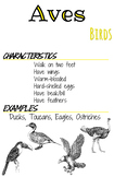 Classes Posters- Aves
