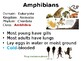 Classes of Animals PowerPoint Notes