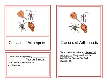 Classes of Arthropods - Montessori Four-Part Cards (9-12)