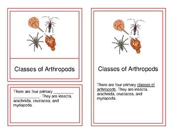 Classes of Arthropods - Montessori Four-Part Cards (9-12)