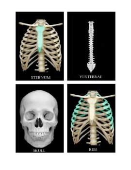 Classical Conversations Cycle 3 Science (Week 2)- Axial Skeleton