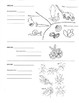 Classification - Animal Phylum Overview & Coloring Worksheet Middle School