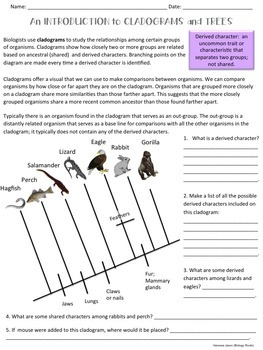 Classification- Cladograms and Trees
