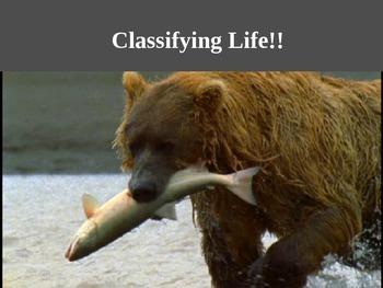 Classification Cloze
