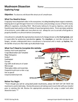 Mushroom Dissection