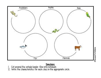 Classification: How Are Vertebrates Organized into Classes?