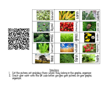 Classification: How is the Plant Kingdom Organized?